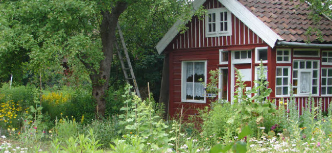 Schrebergärten: Die kleine Oase hinter Hecken