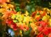 Herbst – Stress bewältigen, Wohlbefinden fördern